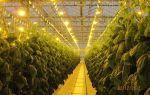 Лампы и светильники для теплиц: как выбрать освещение, ультрафиолетовые, накаливания, светодиодные, фото, видео – выращиваем в теплице