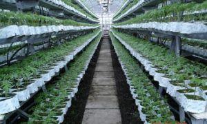 Многоярусные грядки: изготовление своими руками, фото ярусных конструкций, видео – выращиваем в теплице