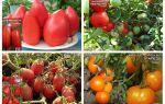 Помидоры низкорослые: сорта для теплиц, названия, описание, фото, видео – выращиваем в теплице