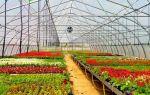 Результаты поиска – выращиваем в теплице