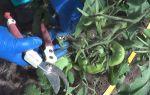Как обрезать помидоры в теплице: когда обрывать, сколько кистей оставлять, правила удаления, дальнейший уход, фото, видео – выращиваем в теплице