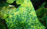 Теплицы для выращивания зелени круглый год: как выбрать, как установить, петрушка, лук, салат, укроп,кому продать, фото, видео – выращиваем в теплице