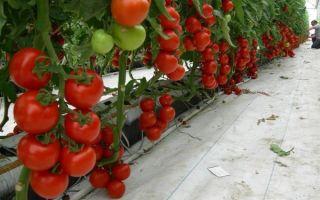 Посадка огурцов по лунному календарю 2018 на рассаду и в открытый грунт: сроки и советы по выращиванию – выращиваем в теплице