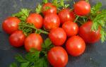 Помидоры столыпин (35 фото): описание, сорта, кто сажал, томаты – выращиваем в теплице