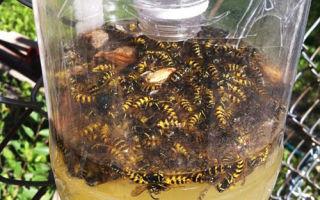 Как избавиться от пчел на своем участке: от диких, соседских, чего боятся, защита, яд, ловушки, как отвадить, какие растения не любят, видео – выращиваем в теплице