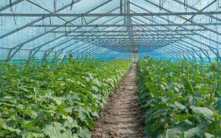 Тепличные хозяйства в россии как бизнес: план на круглый год, рентабельность, как построить зимнюю теплицу, выгоден ли, оборудование, инвестиции, видео – выращиваем в теплице