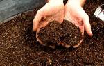 Бархатцы как удобрение: не растут, чем подкормить, болезни и вредители, лечение, фото, видео – выращиваем в теплице