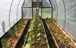 Разновидности теплицы – выращиваем в теплице