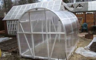 Теплица синьор помидор: характеристика, сборка, преимущества, фото, видео – выращиваем в теплице