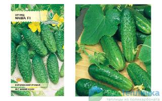 Ранние сорта огурцов для теплицы: названия с фото, описания, как получить хороший урожай, видео – выращиваем в теплице