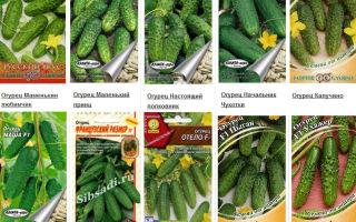 Поздние сорта огурцов для теплицы: названия, фото, описание, видео – выращиваем в теплице