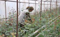 Как вырастить розы из семян: можно ли, технология выращивания, посадка, уход, видео, фото – выращиваем в теплице