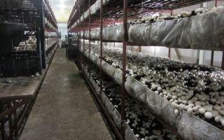 Выращивание грибов в домашних условиях: технологии, нетрадиционные методы, фото, видео – выращиваем в теплице