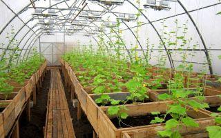 Строительство теплицы – выращиваем в теплице