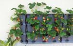 Выращивание клубники в домашних условиях круглый год: как вырастить из семян, в квартире на подоконнике, балконе, в мешках, советы, фото, видео – выращиваем в теплице