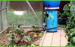 Чем можно опрыскивать помидоры: рассаду, кусты, нужно ли, эпином, фото, видео – выращиваем в теплице