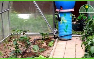 Таймер для полива: автоматический для капельного, другие виды, принцип работы, установки, фото, видео – выращиваем в теплице