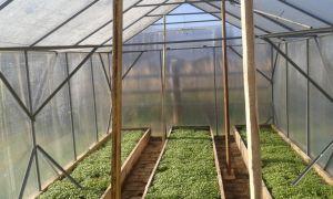 Почему вянут листья у арбуза в теплице: болезни, лечение, фото, видео – выращиваем в теплице