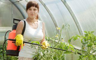 Опрыскивание борной кислотой помидоров в теплице: правила и схема обработки, фото, видео – выращиваем в теплице