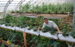 Царский домик: фото теплицы, описание, достоинства, установка, видео – выращиваем в теплице
