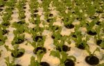 Как вырастить салат в домашних условия на подоконнике: посадка, уход, фото, видео – выращиваем в теплице