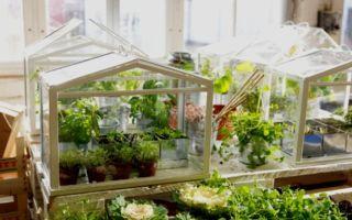 Теплица дома и в квартире: как построить своими руками, на подоконнике, на окне – выращиваем в теплице