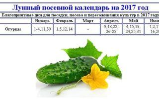 Посадка огурцов в июле по лунному календарю – выращиваем в теплице