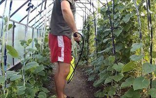 Борьба с паутинным клещом в теплице: как избавиться, чем обрабатывать, лучшие методы и средства, фото, видео – выращиваем в теплице