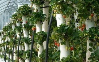 Вертикальные грядки для огурцов: как сделать, особенности выращивания, фото, видео – выращиваем в теплице