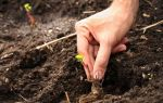 Пятна на листьях огурцов в теплице: желтые, белые, буры, причины, профилактика, лечение, фото, видео – выращиваем в теплице