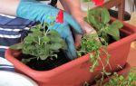Тля на помидорах в теплице: как бороться с белой, черной, фото, видео – выращиваем в теплице
