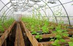 Животные в теплице – выращиваем в теплице