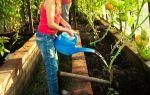 Помидоры бобкат (45 фото): характеристика, описание, сорт, томата, отзывы – выращиваем в теплице