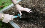 Подготовка земли к посадке: обработка земли, уход за теплицей, мульчирование, севооборот, фото, видео – выращиваем в теплице