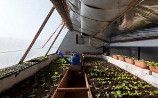 Уход за помидорами в теплице из поликарбоната: как правильно ухаживать, этапы, советы и рекомендации, фото, видео – выращиваем в теплице