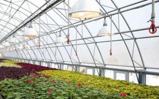 Светодиодные лампы для растений: как сделать своими руками, схема для теплицы, фото, видео – выращиваем в теплице