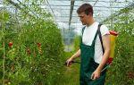 Почему лопаются помидоры в теплице: причины, лечение в парнике, профилактика, фото, видео – выращиваем в теплице