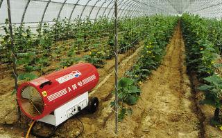Отапливаемые теплицы из поликарбоната: характеристика, преимущества, как отапливать, фото, видео – выращиваем в теплице