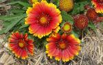 Теплица агроном: характеристика, отзывы о парнике, фото, видео – выращиваем в теплице