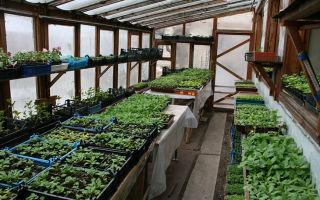 Домашняя оранжерея: изготовление для дома, квартиры, фото, видео – выращиваем в теплице