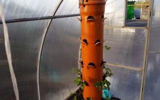 Выращивание клубники в трубах пвх, мешках, бочках: преимущества, технология, фото, видео – выращиваем в теплице