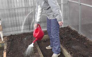 Обработка почвы и теплицы медным купоросом: когда необходима, дозировка, инструкция по применению, видео – выращиваем в теплице