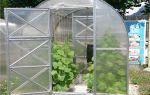 Теплица дачная двушка: характеристика, габариты, сборка, фото, видео – выращиваем в теплице
