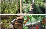 Уход за помидорами в июле в теплице: освещение, температура, подкормка и полив томатов, фото, видео – выращиваем в теплице