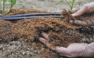 Подкормка рассады помидоров в домашних условиях: чем удобрять, схема, дозировка, фото, видео – выращиваем в теплице