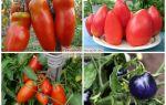Розовые помидоры: ранние, среднеспелые, поздние сорта для теплиц, описание, фото, видео – выращиваем в теплице