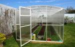Цветы портулак: выращивание из семян, фото, сорта, уход, защита, видео – выращиваем в теплице