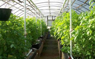 Пользовательское соглашение сайта teplichniku.ru – выращиваем в теплице