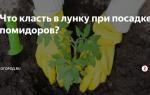 Что класть в лунку при посадке помидоров: какие удобрения добавить, что и когда положить, фото, видео – выращиваем в теплице