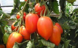 Томат сливка: описание красных, желтых, сладких сортов, отзывы, фото помидоров, видео – выращиваем в теплице